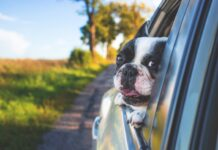 Travelling with Dogs by Car